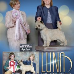 Luna RBISS 2020